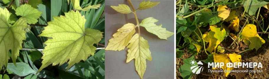 Недостаток азота у растений