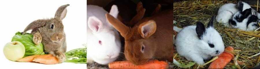 Морковь для кроликов
