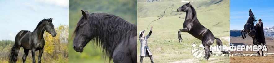 Карачаевские лошади фото