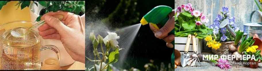 Борная кислота для комнатных растений
