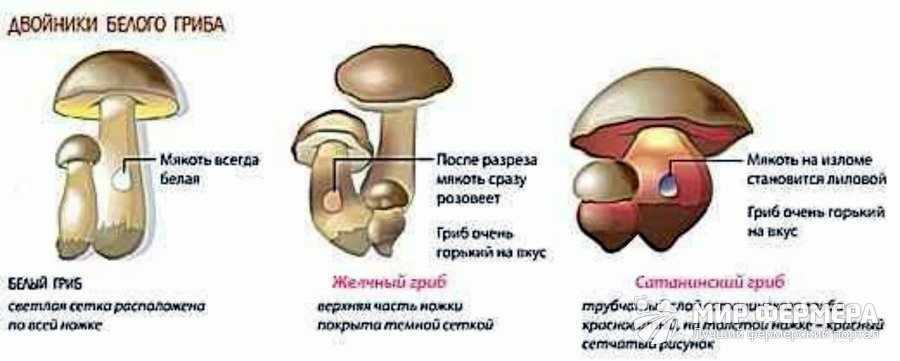 Несъедобный белый гриб