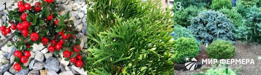 Высокорослые растения для альпийской горки