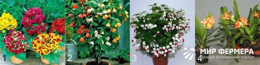 Цветы для дома виды и фото