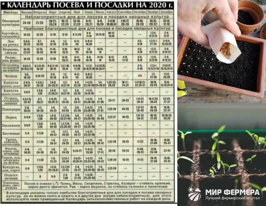 Лунный календарь садовода 2020