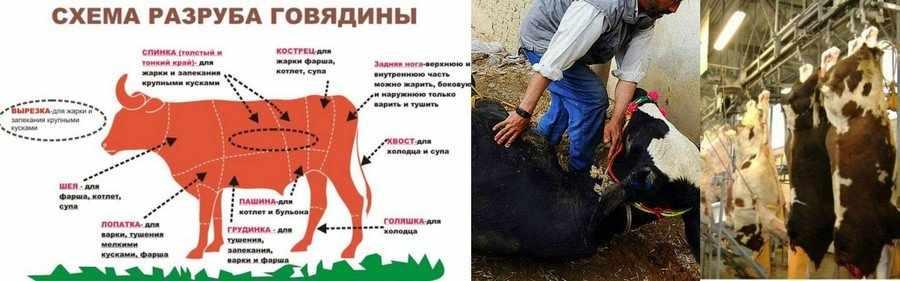 Разделка быка