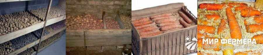 Как хранить картошку и морковь в погребе