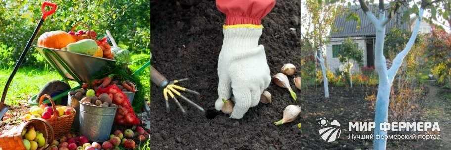 Садово-огородные работы в октябре
