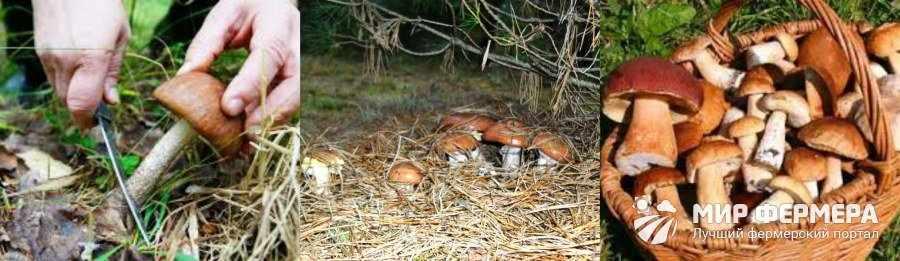 Как собирать грибы