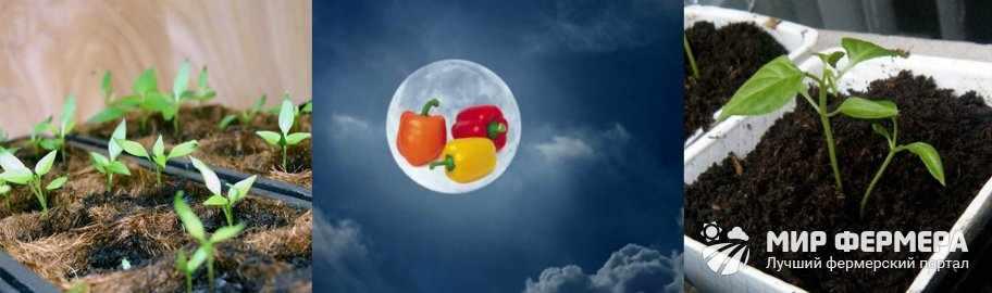 Посев перца по Лунному календарю