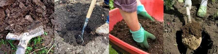 Подготовка почвы к посадке роз