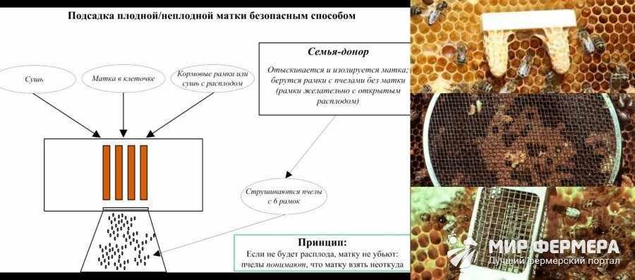 Методы подсадки пчелиных маток