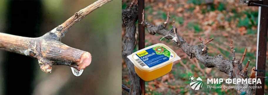 Уход за виноградом после обрезки
