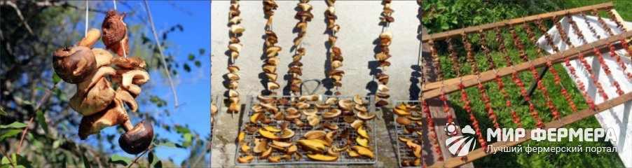 Как сушить грибы на солнце