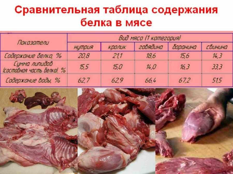 Чем полезно мясо нутрии