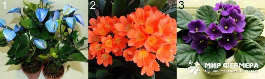Цветущие тенелюбивые растения