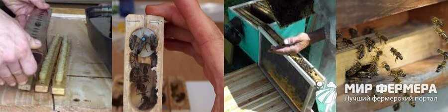 Подсадка пчелиной матки в семью через леток