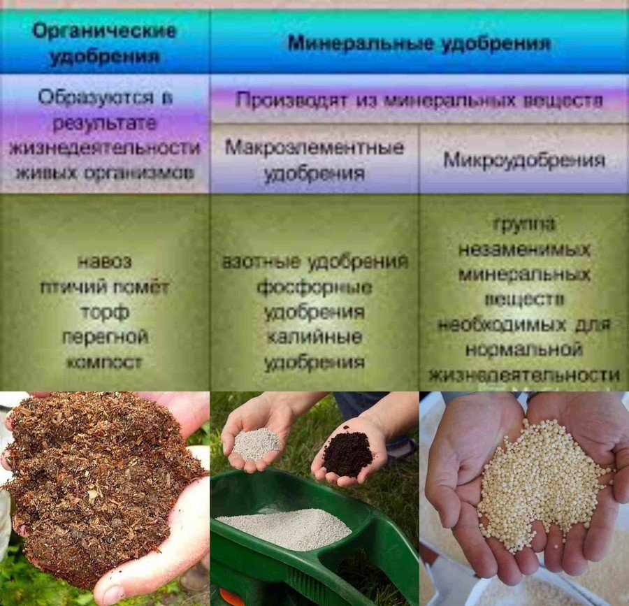 Отличие органических удобрений от минеральных
