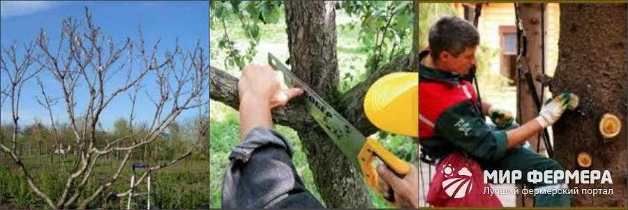 Как сделать санитарную обрезку дерева