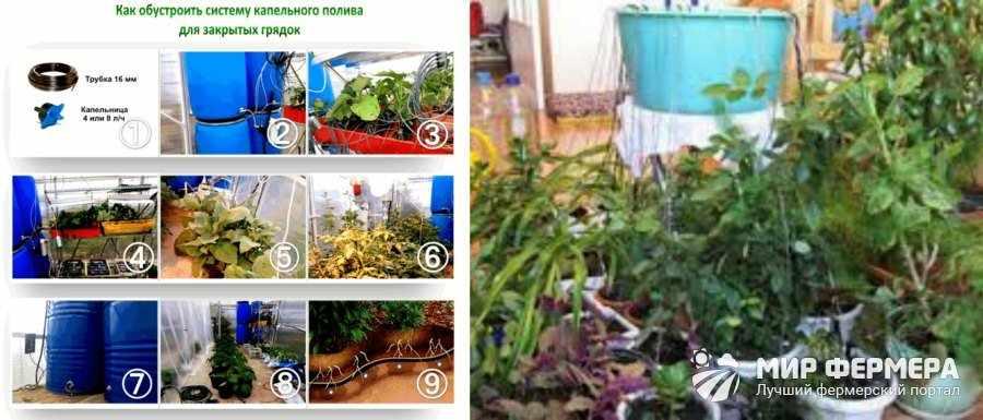 Капельный полив для комнатных растений