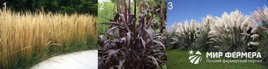 Высокие декоративные растения