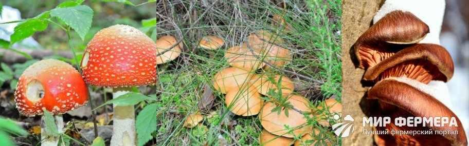 Как размножаются грибы в лесу
