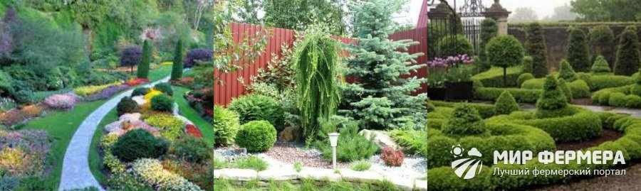 Размещение декоративных кустарников в саду