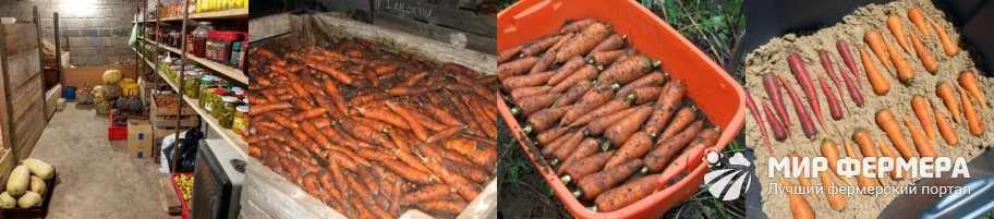 Хранение моркови зимой