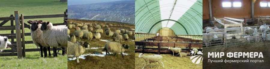 Помещение для содержания овец