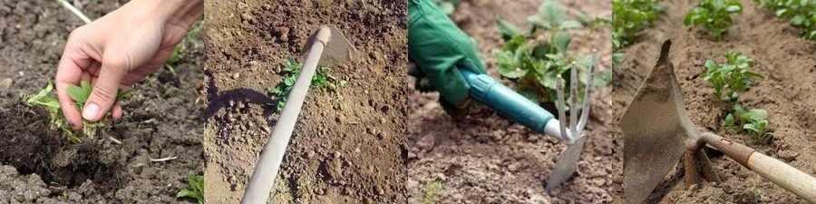 Как рыхлить картошку