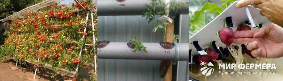 Уход за растениями на гидропонике