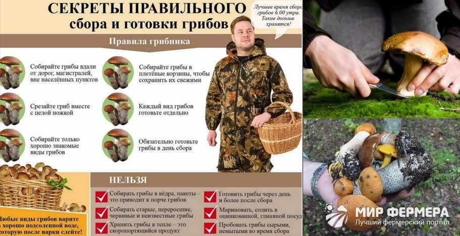 Методы сбора грибов