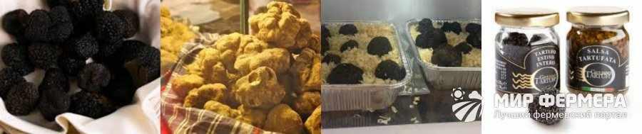 Как хранить трюфели