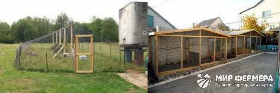 Выращивание фазанов на ферме
