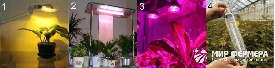 Какую лампу для комнатных растений выбрать