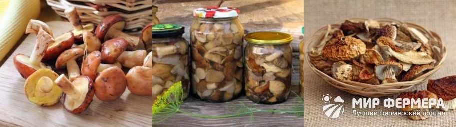 Как готовить белые грибы