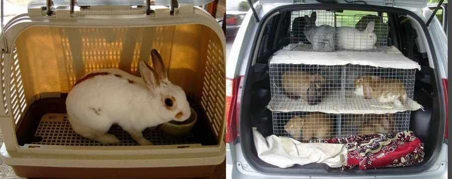 Как перевозить кроликов