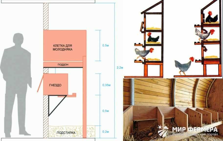 Как установить гнезда для несушек