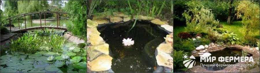 Как оформить пруд в саду