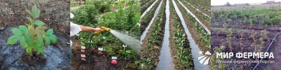 Системы полива для малины