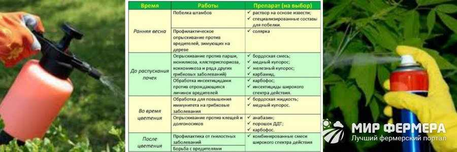 Обработка кустарников против болезней