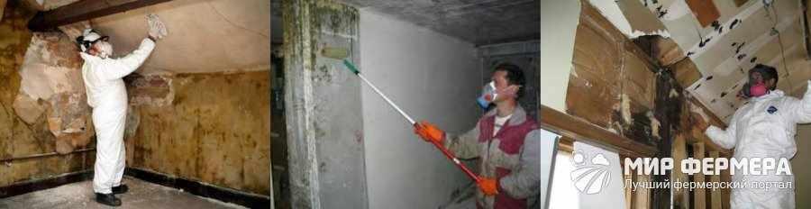Как убрать плесень в подвале
