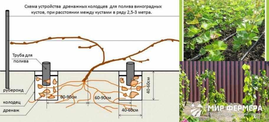 Система полива винограда