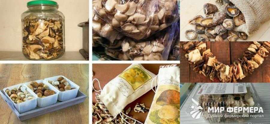 Способы хранения грибов