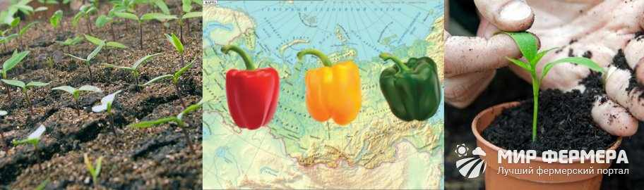Когда сеять перец в Сибири и на Урале