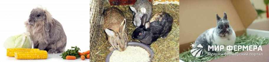 Рацион для кроликов зимой