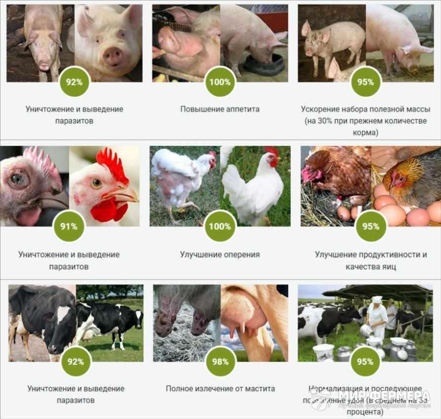 Как действует Animal Grow