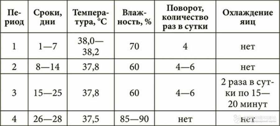 Полная таблица инкубации утиных яиц