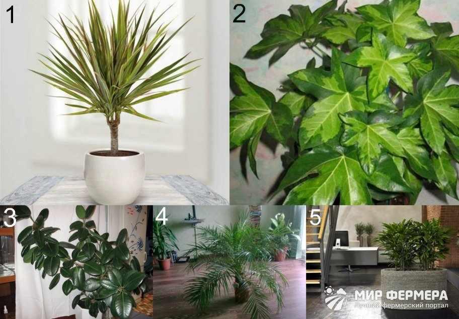 Теневыносливые растения для прихожей
