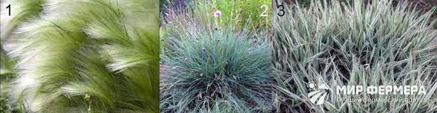 Растения средней высоты для сада