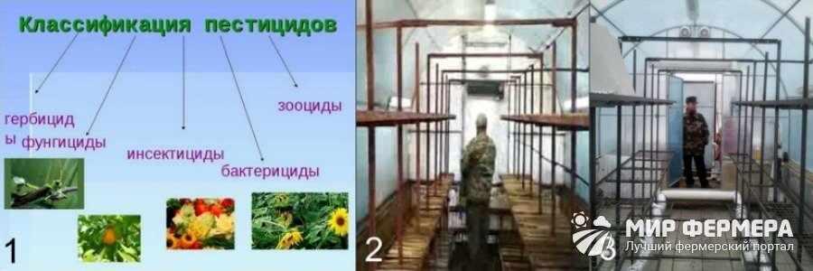 Дезинфекция помещения для выращивания вешенки